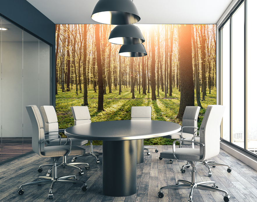 printed-wallpaper-canberra-sun-forest-office