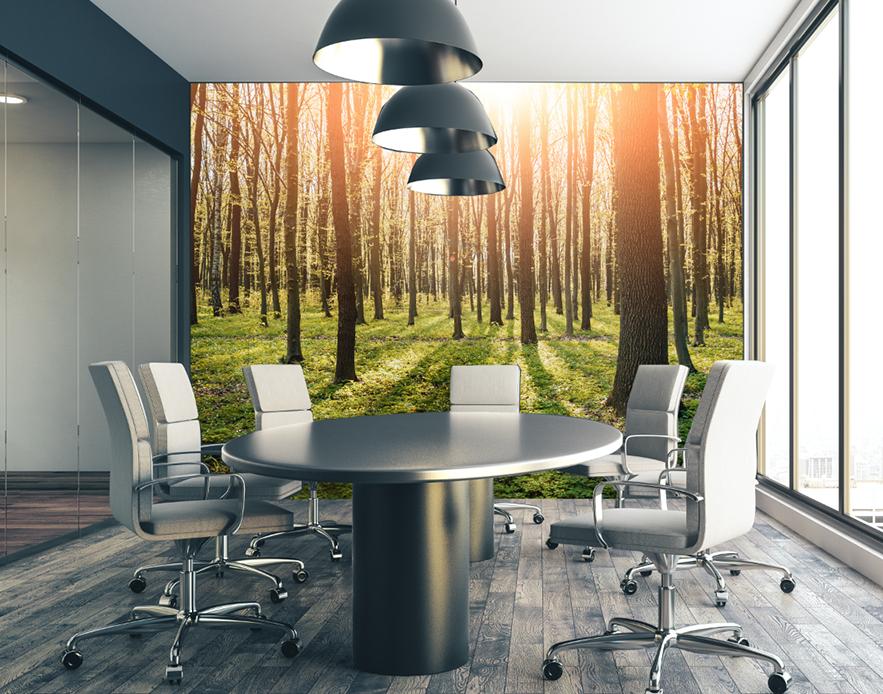 Custom Printed Wallpaper - Sun Forest for Office